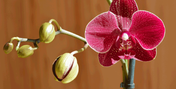 orchid-720765_1920