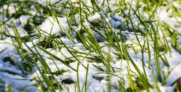 snow-624363_1920