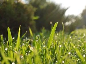 Grass 2015 May_Jun