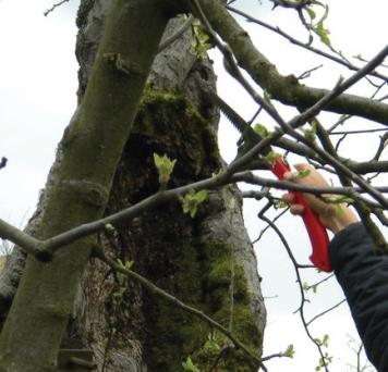 pruning saw.jpg