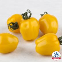Tomato Apple Yellow'